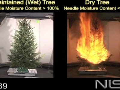 Christmas Tree Fire -  Hazards of a Dry Tree