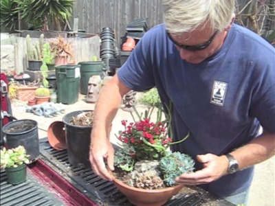 How to Make a Succulent Dish Garden in 5 minutes