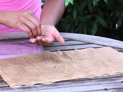 How to Germinate Zinnia Seeds With Plastic Bags & Paper Towels : Garden Seed Starting