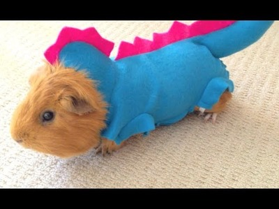 Guinea Pig in funny and cute dragon outfit