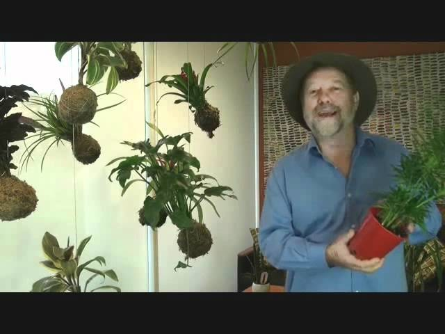 How to make a String Garden