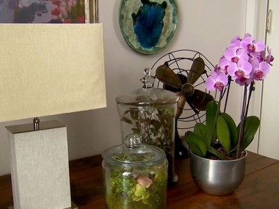 Indoor Plant Containers | At Home With P. Allen Smith