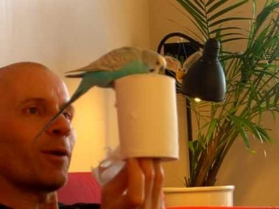 A budgie creates art from toilet paper