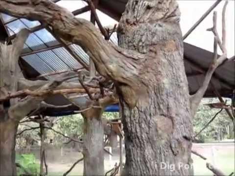 Artificial Concrete Trees in Bird Aviary