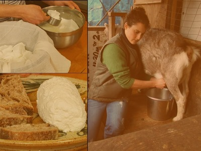 How to Make Soft Goat's Milk Cheese: Chèvre