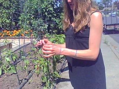 Organic edible home garden estate and square foot gardening