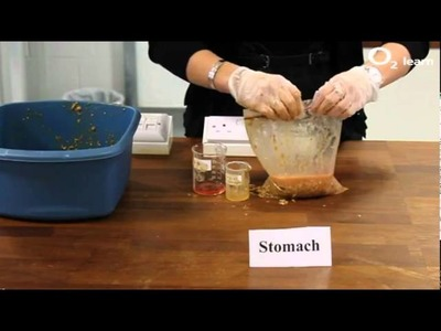 Making Poo:The Digestive System