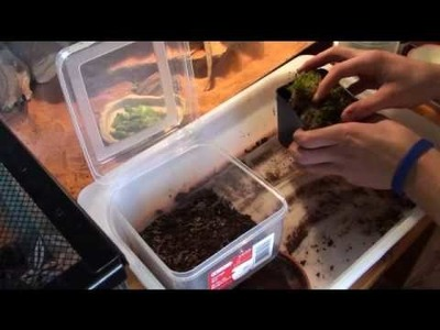 "How to Grow Sphagnum Moss ""Before and After!"" Part 1 of 3"