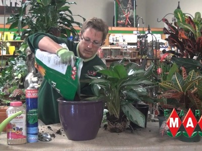 How to Properly Transplant Houseplants