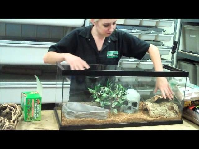 Setting up a Ball Python Display Cage