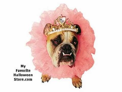 Cute Halloween Costumes for Girl Dogs