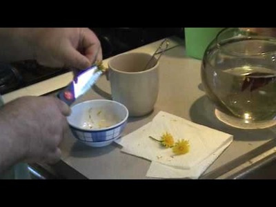 How 2 Make Dandelion Tea