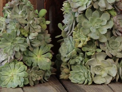 How to Make a Living Succulent Tree