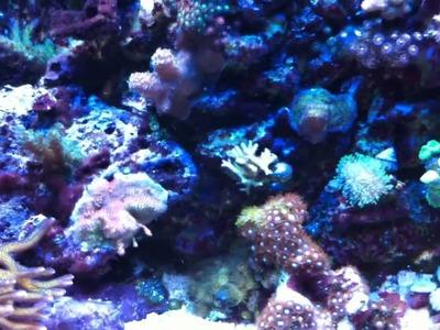 My 20L DIY AIO foam wall mixed reef