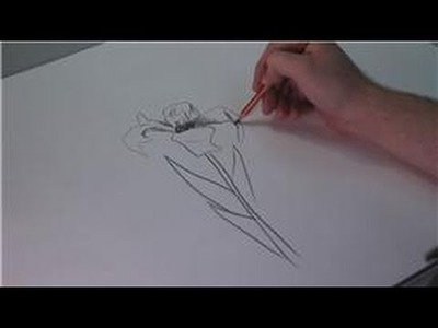 Drawing Lessons : How to Draw Iris Flowers