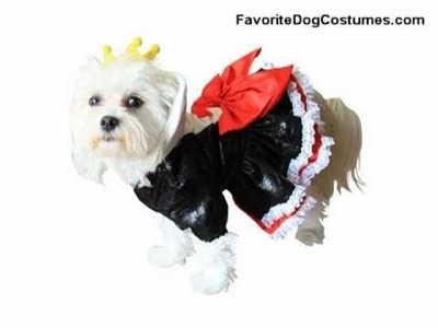 Alice in Wonderland Dog Halloween Costume