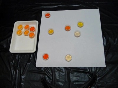 Taste Test Methodology - Projective Mapping