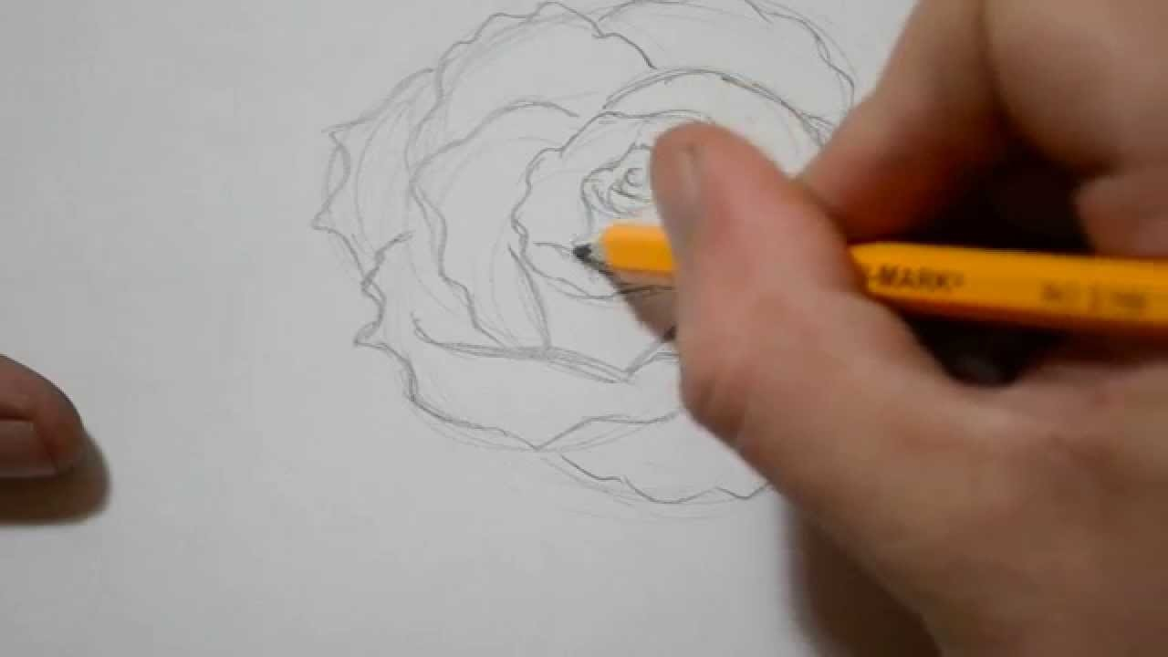How to Draw a Rose - Quick Sketch