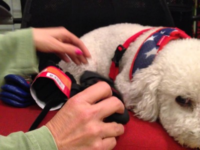 Best Boots for Your Dog! | Keep Doggie Safe
