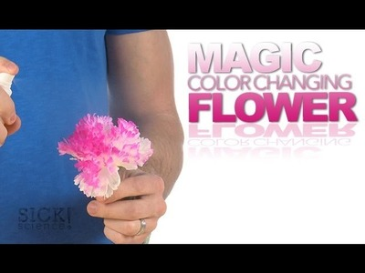 Magic Color Changing Flower - Sick Science! #177