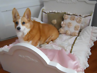 Making a Special Dog Bed