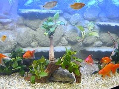 3d fish tank background homemade DIY