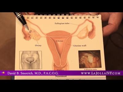 How Many Eggs can a Woman Produce? - La Jolla IVF