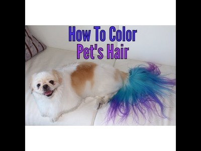 How to color dye your dog