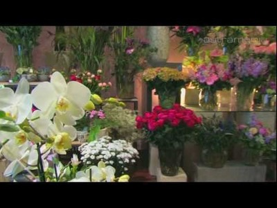 Blumen Bronold , Wien; Cut flowers, potted plants and decor: Commercials. Promotional: .