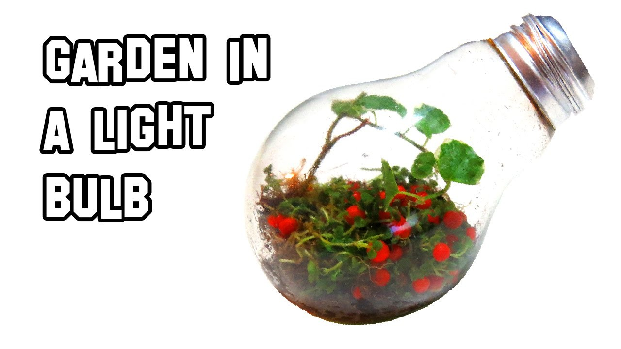 How To Make A Garden In A Light Bulb | Cool Science Experiment