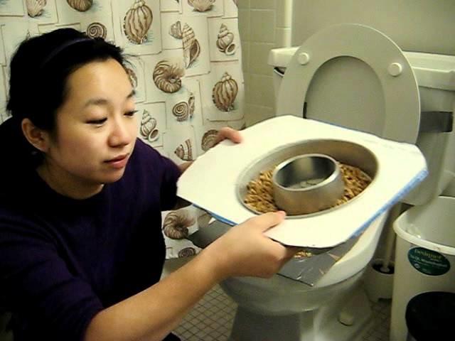 DYI Cat Toilet Training Kit