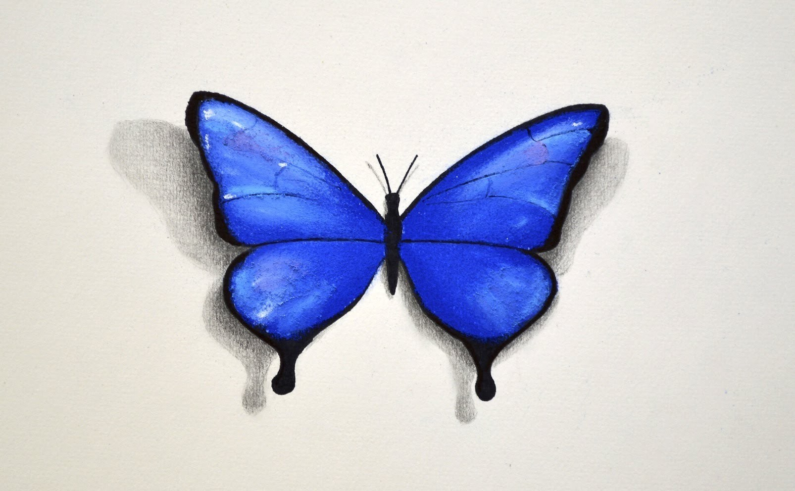 How to Draw a Butterfly With Pastel - Fine Art-Tips