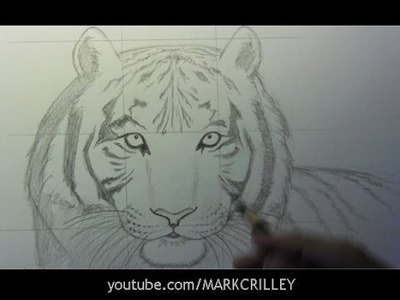 How to Draw a Tiger, Part 1: Line Placement