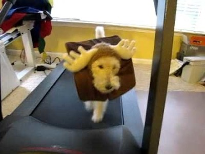 Days of Ivy - WFT - IMMA MOOSE - HALLOWEEN COSTUME