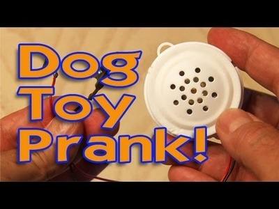 Dog Toy Prank!