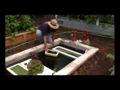 How to Easily Grow Organic Fish Food – Duckweed in Floating Rafts
