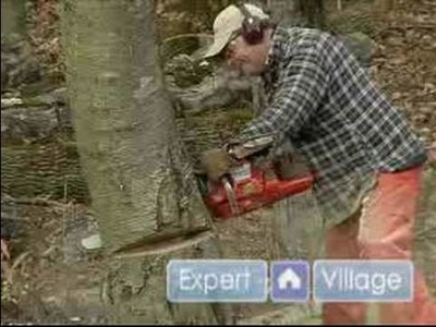 How to Cut Down a Tree : The Proper Angle for the Felling Cut of a Tree