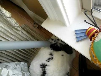 How to de-shed a bunny - use a vacuum!