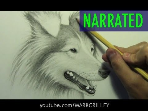 How to Draw a Dog [Narrated Step by Step]