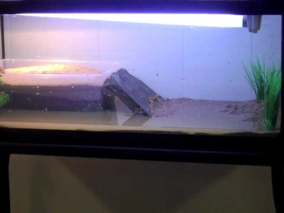 Building a small spotted turtle tank.