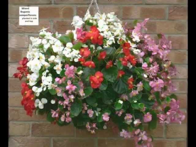 Hanging Basket Ideas.Cestas de flores colgantes.Opknoping mand ideeën.You are going to love it.
