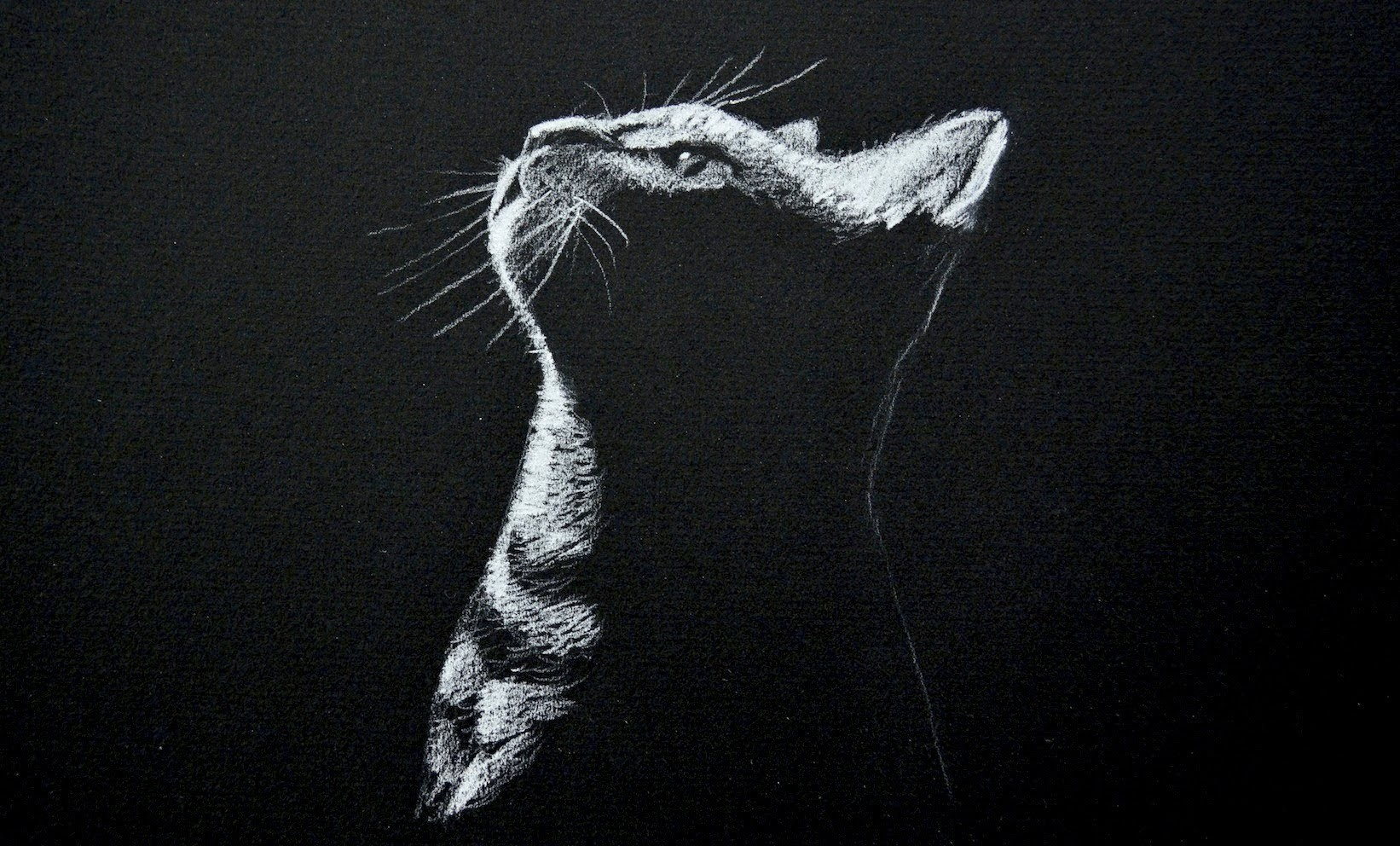 Drawing a Cat - White on Black Paper - Time Lapse