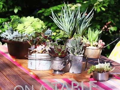 Ideas for Planting Succulents from Lowe's