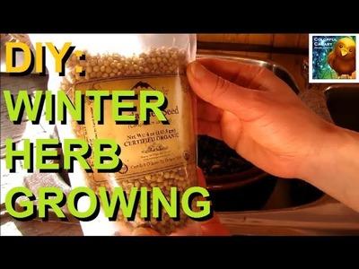 DIY: Winter Herb Growing