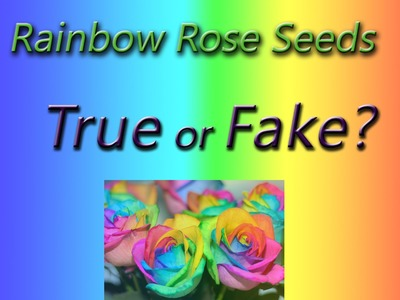 Rainbow Rose Seeds - Is it a FAKE? #1