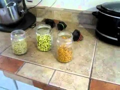 How to Grow Sprouts: Sprouting seeds for good health!