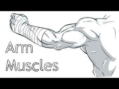 A guide to Arm Muscles.Anatomy
