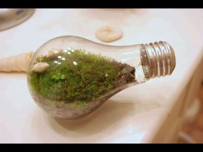 DIY: How to make a Terrarium in a Lightbulb