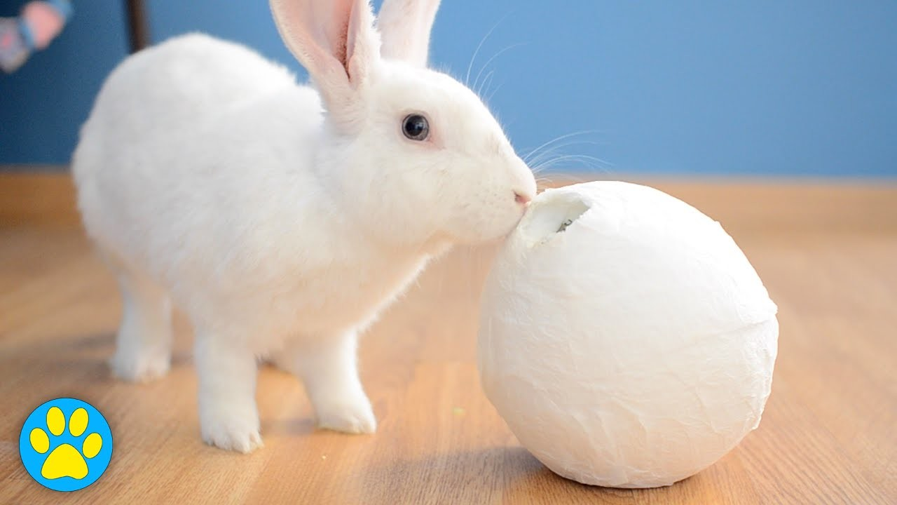 DIY Treat Ball For Small Animals