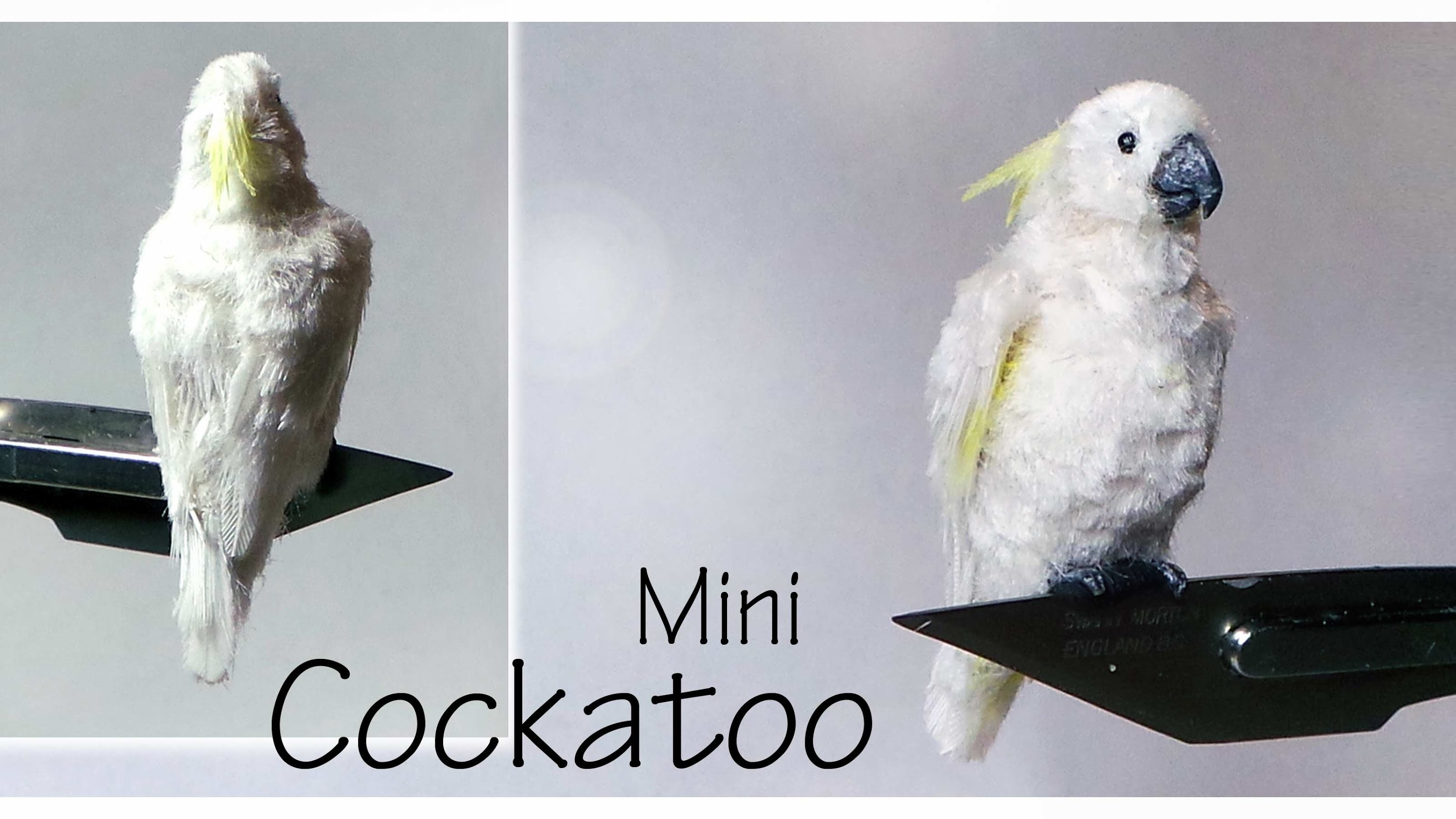 Miniature Cockatoo - Polymer Clay Tutorial
